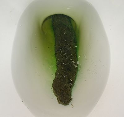 Big Poop in Toilet http://coolturds.com/latestturds.html